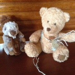 Picture of tow Teddies