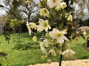 2021 05 02 blossom