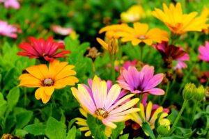 2021 07 18 - Flowers