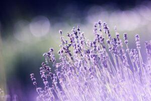 2021 07 25 - Flowers
